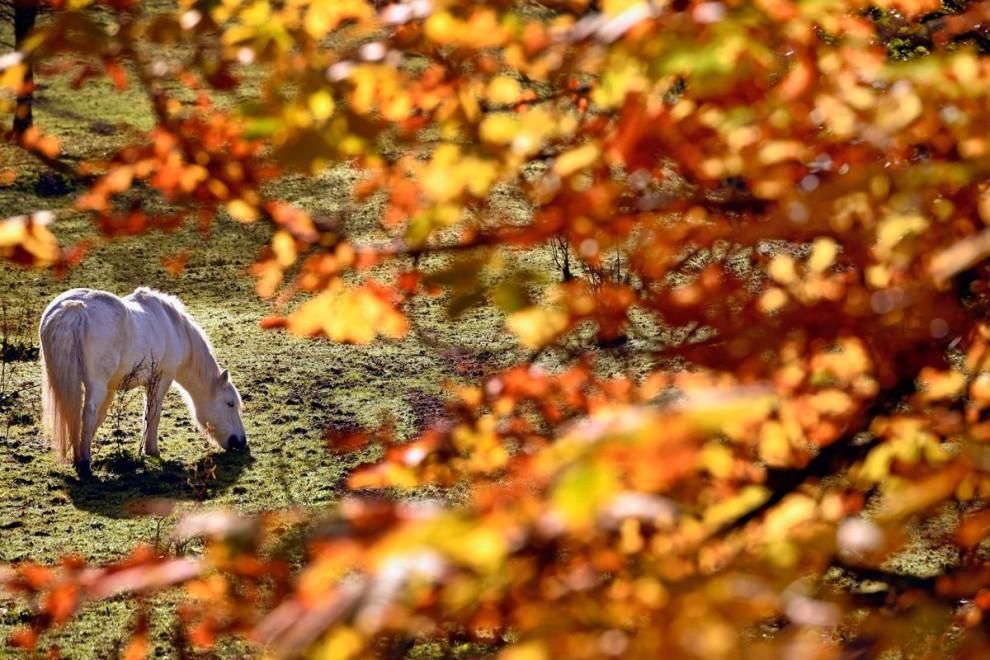 Осеннее великолепие в ярких красках