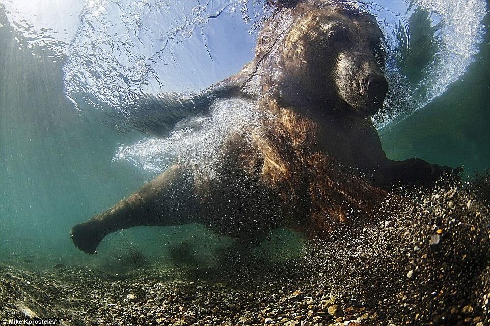 Победители фотоконкурса Siena International Photo Awards