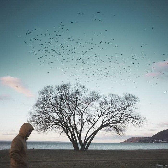 Фотограф снимал одно дерево в течение 2 лет