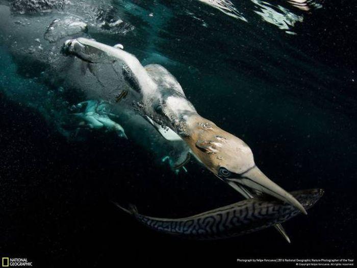 Лучшие работы фотоконкурса National Geographic Nature Photographer 2016