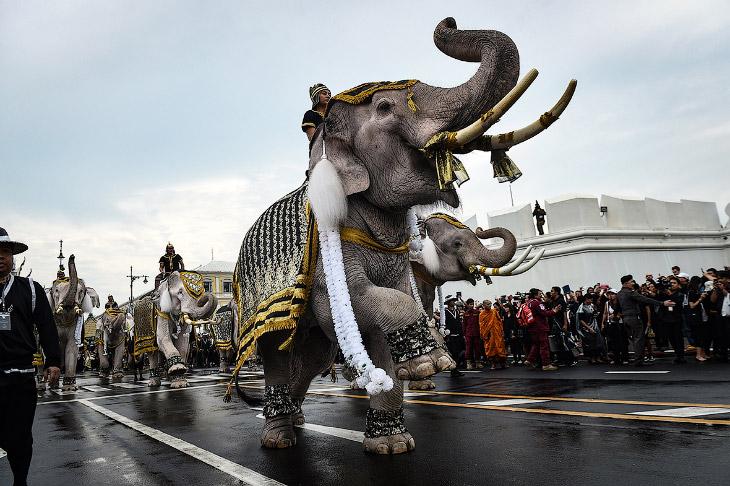 Слоны почтили память короля Таиланда