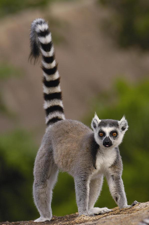 Животные, которых можно встретить лишь в определенных местах