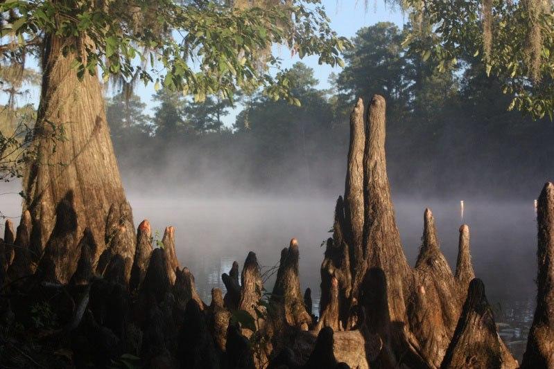 Фантастические кипарисы озера Каддо