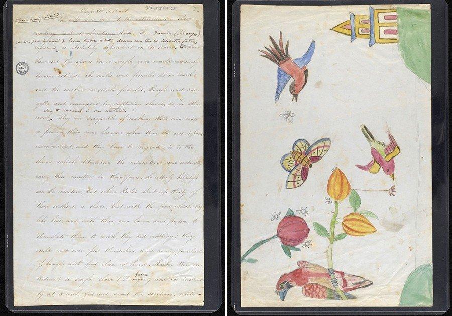 Происхождение видов Чарльза Дарвина и детские рисунки