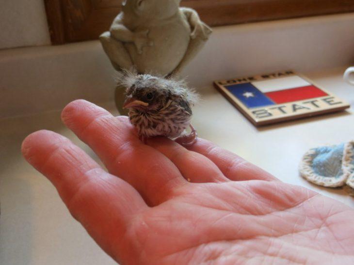 Спасение выпавшего из гнезда птенца