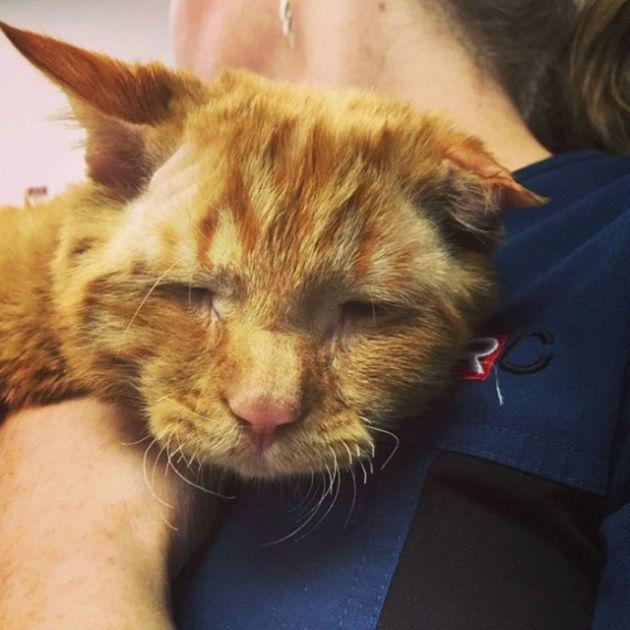 Спасение самого несчастного кота: до и после приюта