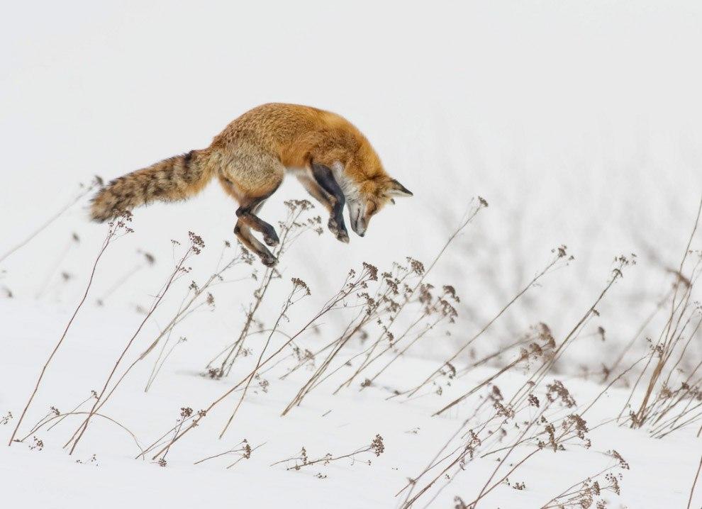 Животные и снег
