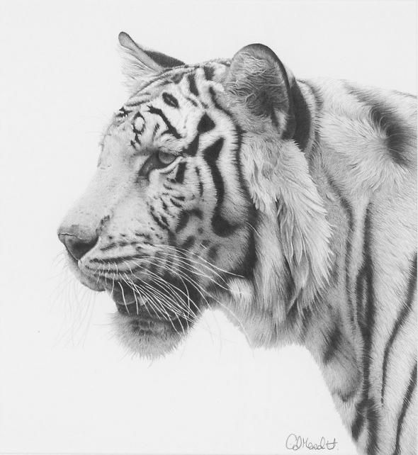 Карандашные рисунки животных