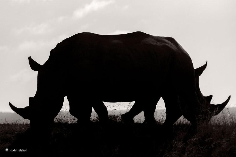 Конкурс фотографий дикой природы Wildlife Photographer of the Year 2016