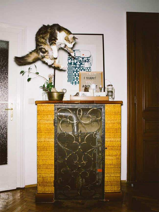 Летающие кошки от фотографа Даниэля Гебхарта Кёккёк