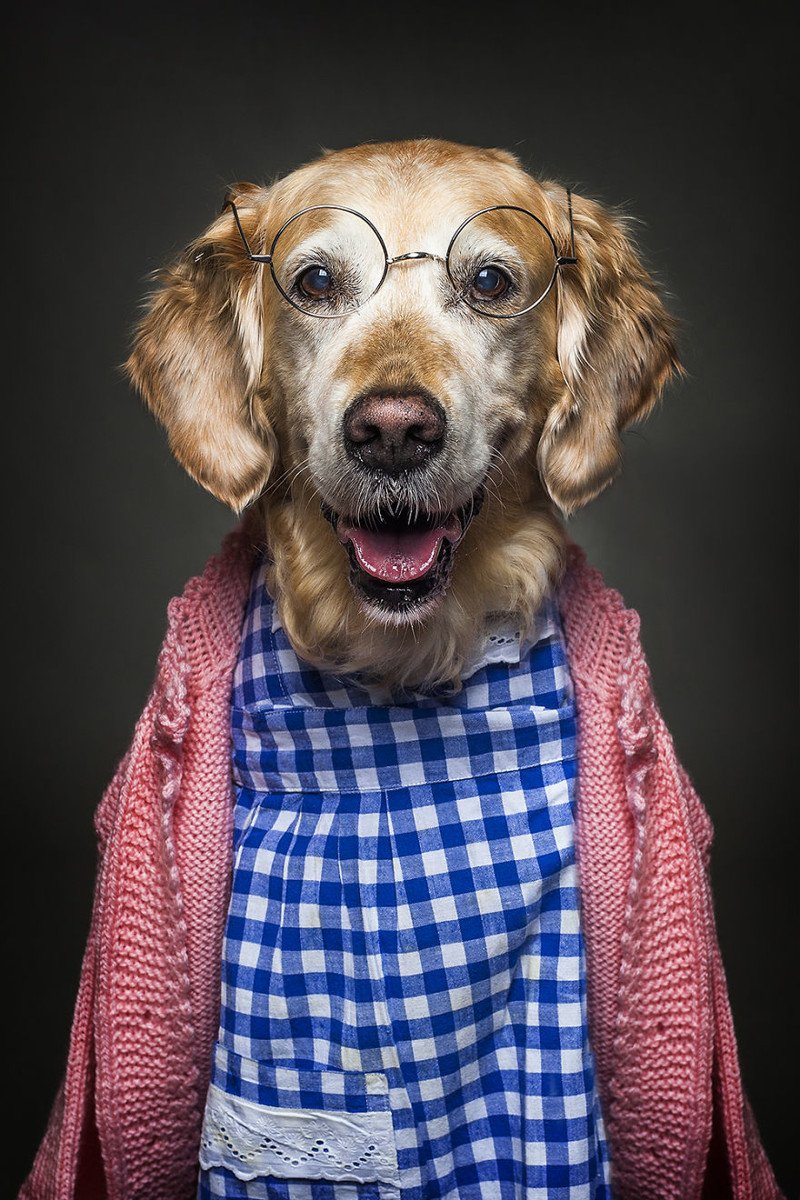 Для, собаки в смешной одежде картинки