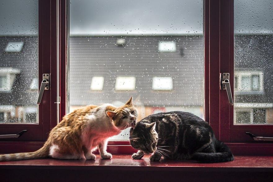 Коты и дождь