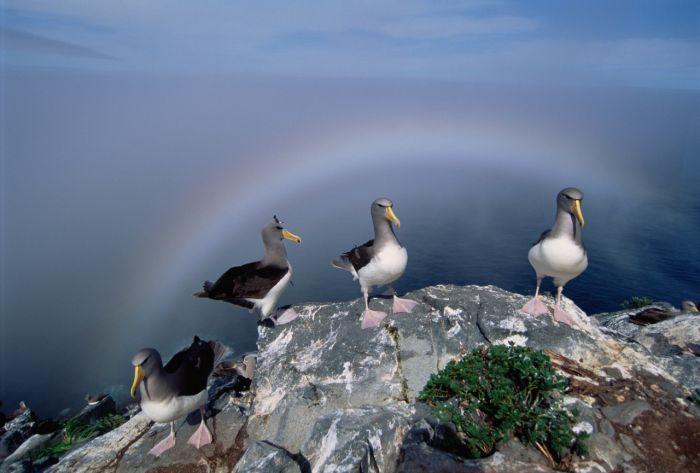 Бесцветная туманная радуга в Шотландии