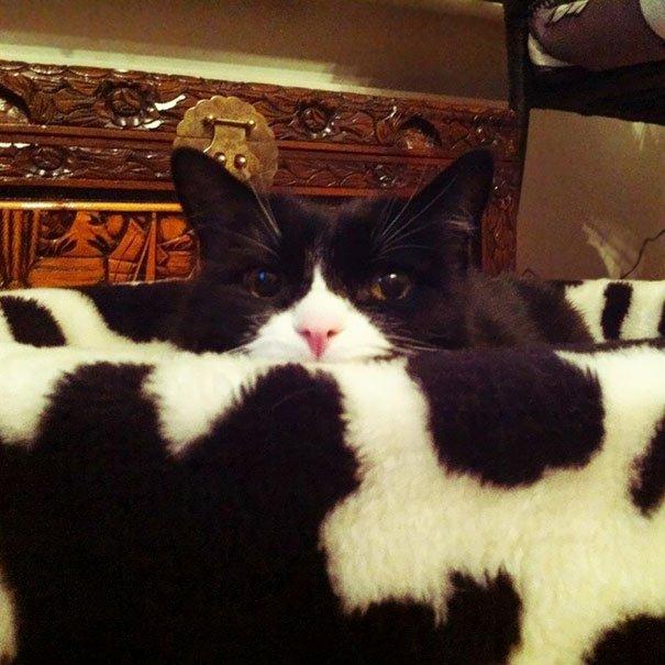 Настоящие мастера маскировки: найди кота на фото