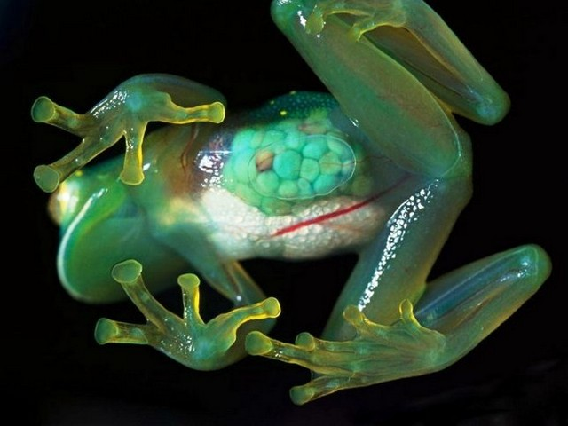 Удивительные прозрачные существа нашей планеты