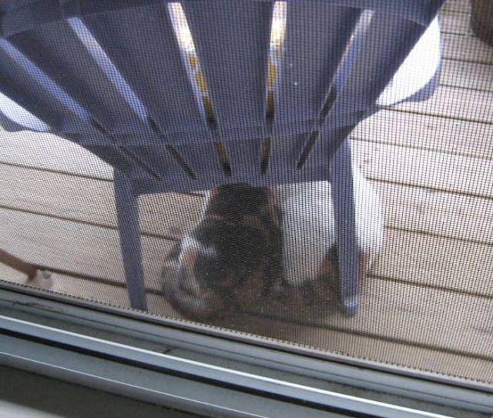 Удивительные синхронные кошки Калли и Хлоя