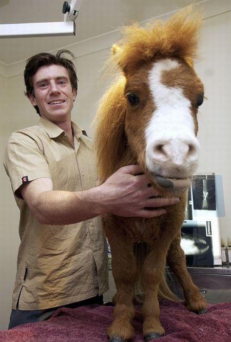 Миниатюрная лошадка Koda