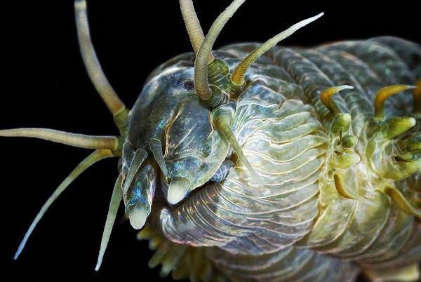 Удивительно красивые существа Белого моря