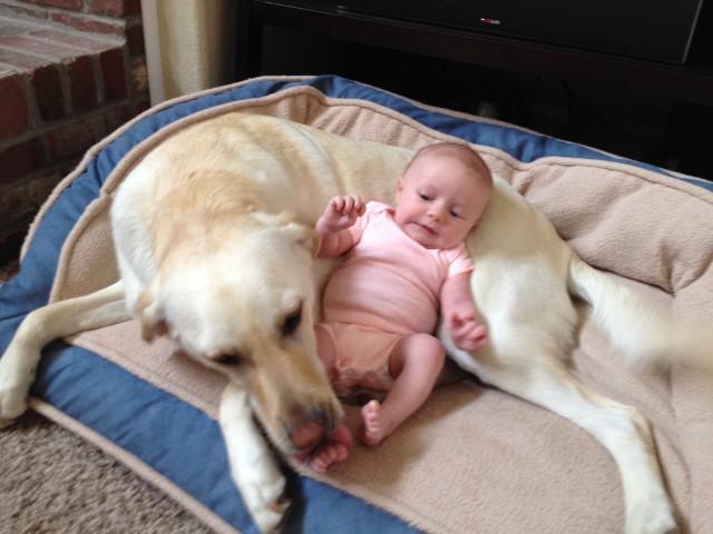 Детки и их четвероногие друзья