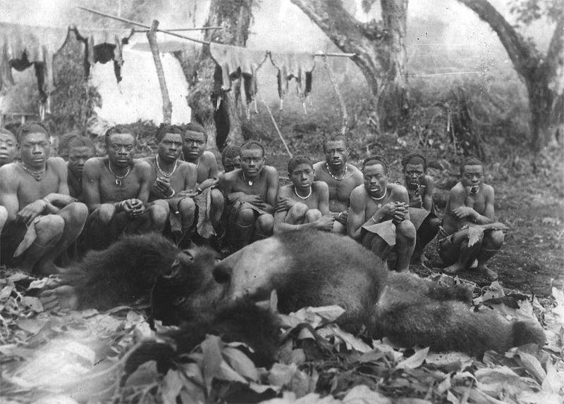 Как из горилл Конго делали чучел