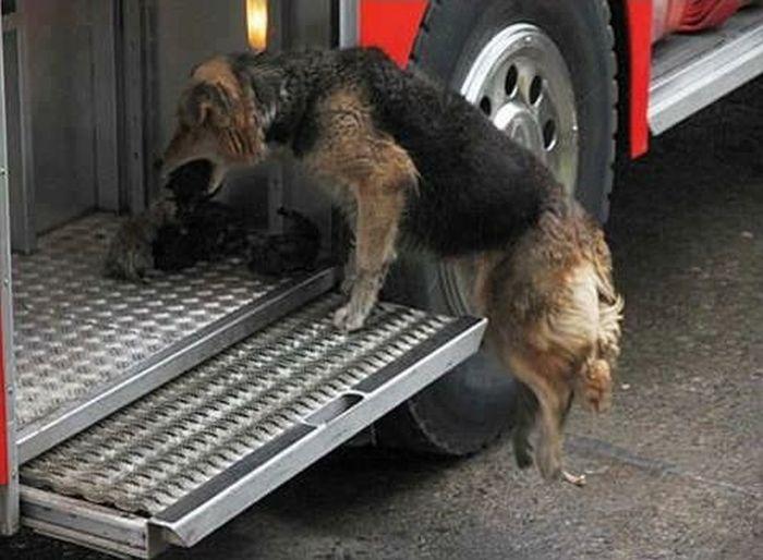 Мать спасла щенков от огня