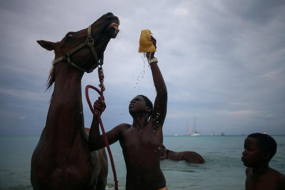 Купание лошадей в Карибском море