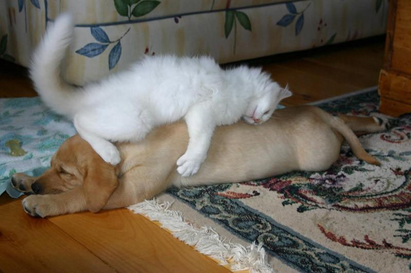Собаки спят в самых невообразимых позах