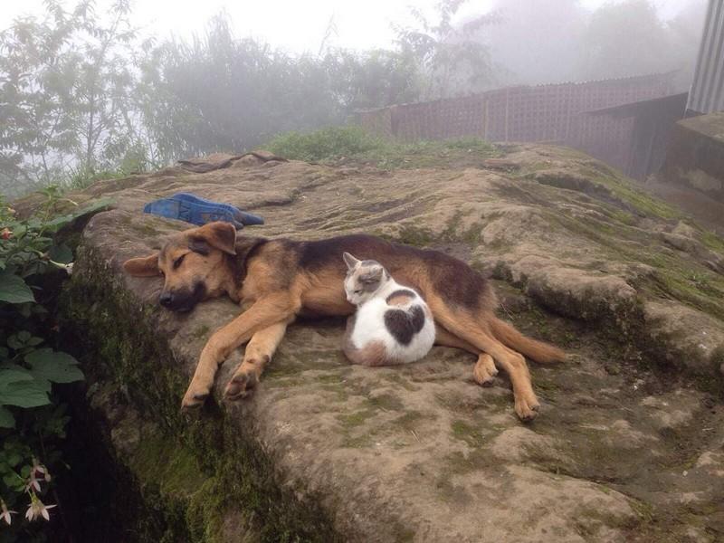 Позитивные животные поднимают настроение