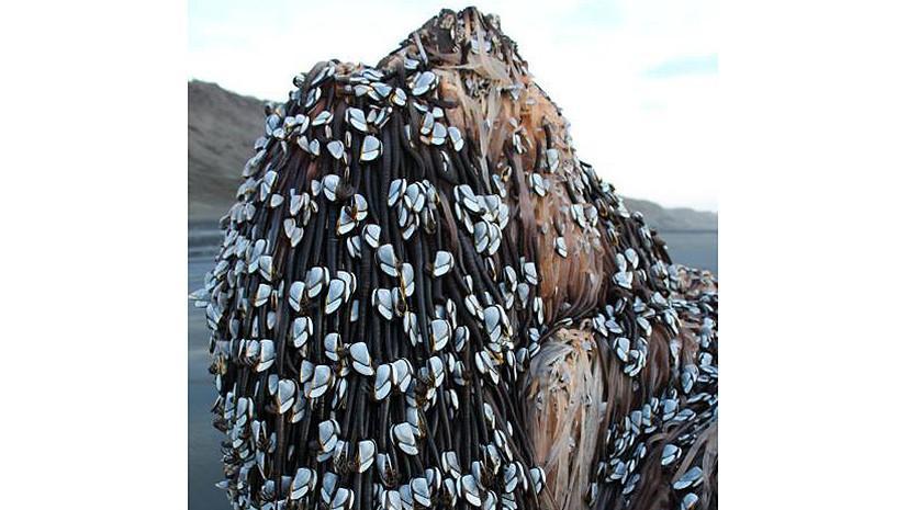 Таинственный предмет на пляже Новой Зеландии