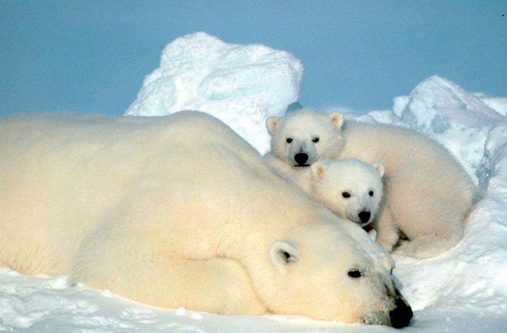 Холодные фотографии Северного полюса