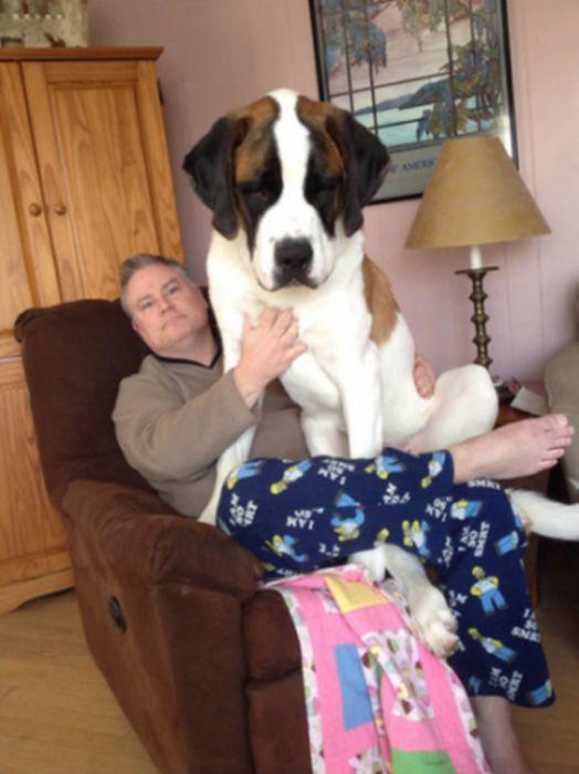 Собаки, которые игнорируют ваше личное пространство