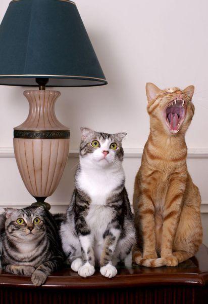 Забавные и милые животные, которые заряжают позитивом
