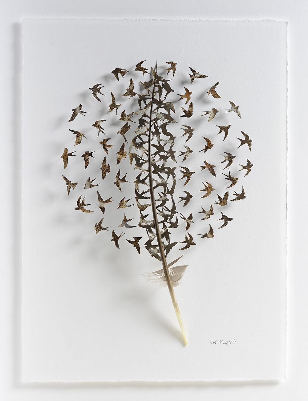 Картины из птичьих перьев от Криса Мейнарда