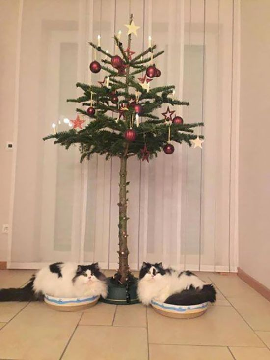 Как защитить елку от домашних животных