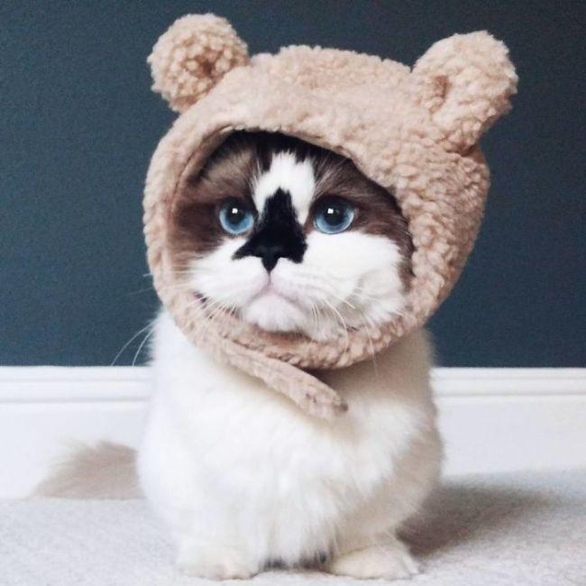 Кот Альберт - звезда соцсетей