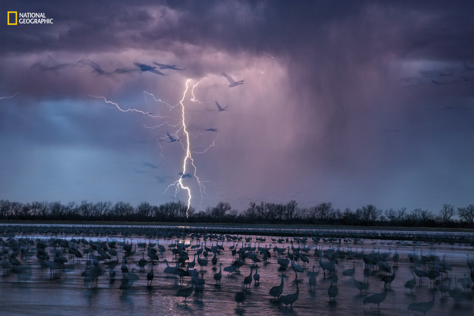 27 самых интересных научных фотографий 2016 года