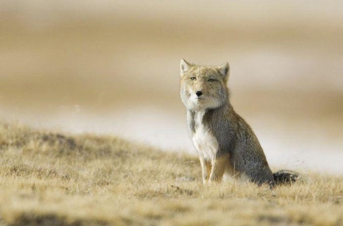 Экзотические животные нашей планеты
