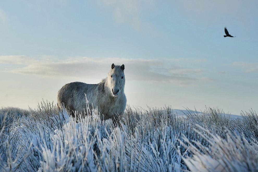 Лучшие фотографии пейзажей и природы 2016 года