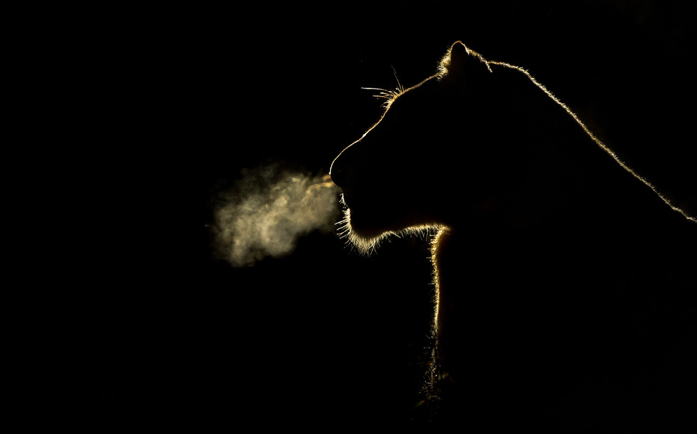 Ночная жизнь в Африке