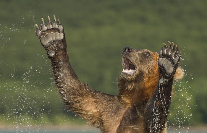 Победители фотоконкурса Дикая природа России-2016 журнала National Geographic