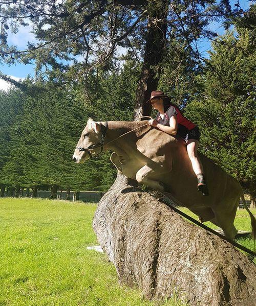 В Новой Зеландии девочка превратила корову в лошадь