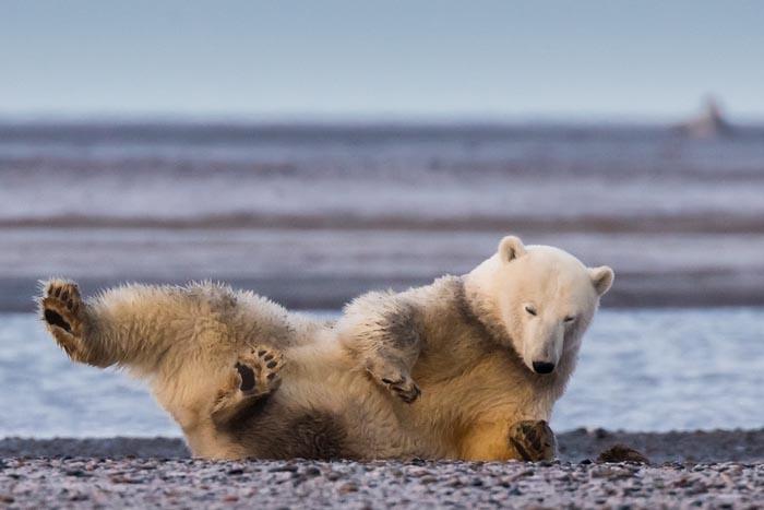 Фотограф приехала на Аляску, но не нашла там снега