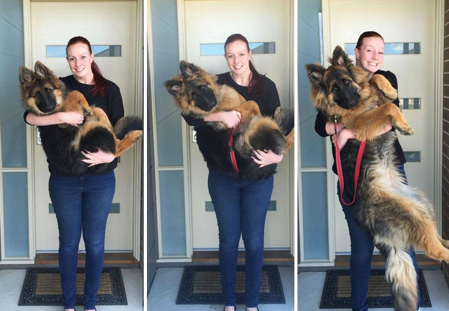 Пара засняла, как быстро вырос их пес