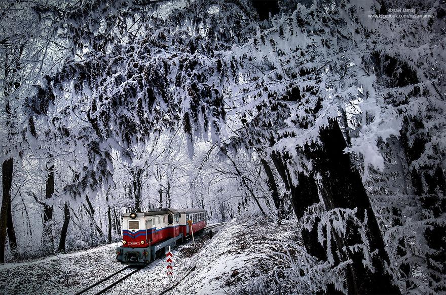 Сказочная красота зимнего леса
