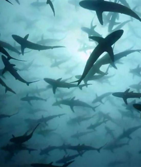 Жуткие фото из морских глубин