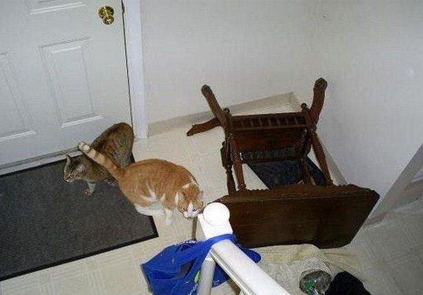 Домашние животные, которые были пойманы с поличным