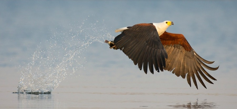 Интересные моменты из жизни птиц на фотографиях