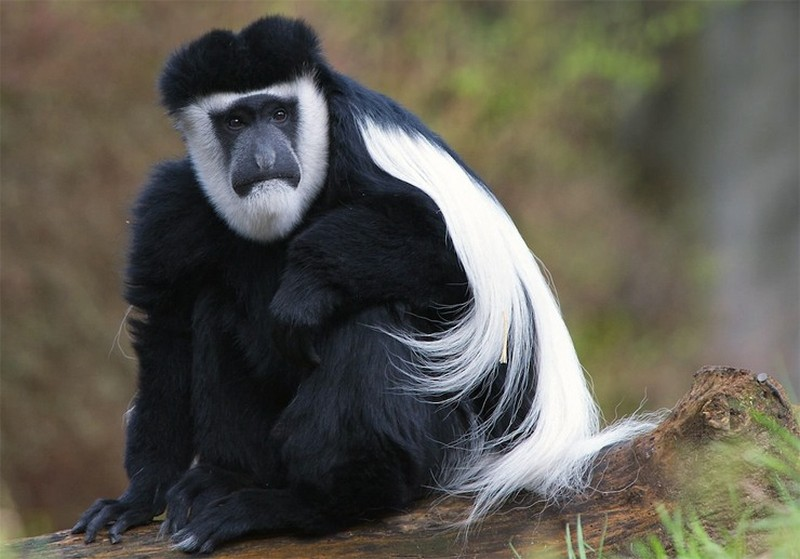10 самых удивительных животных Африки