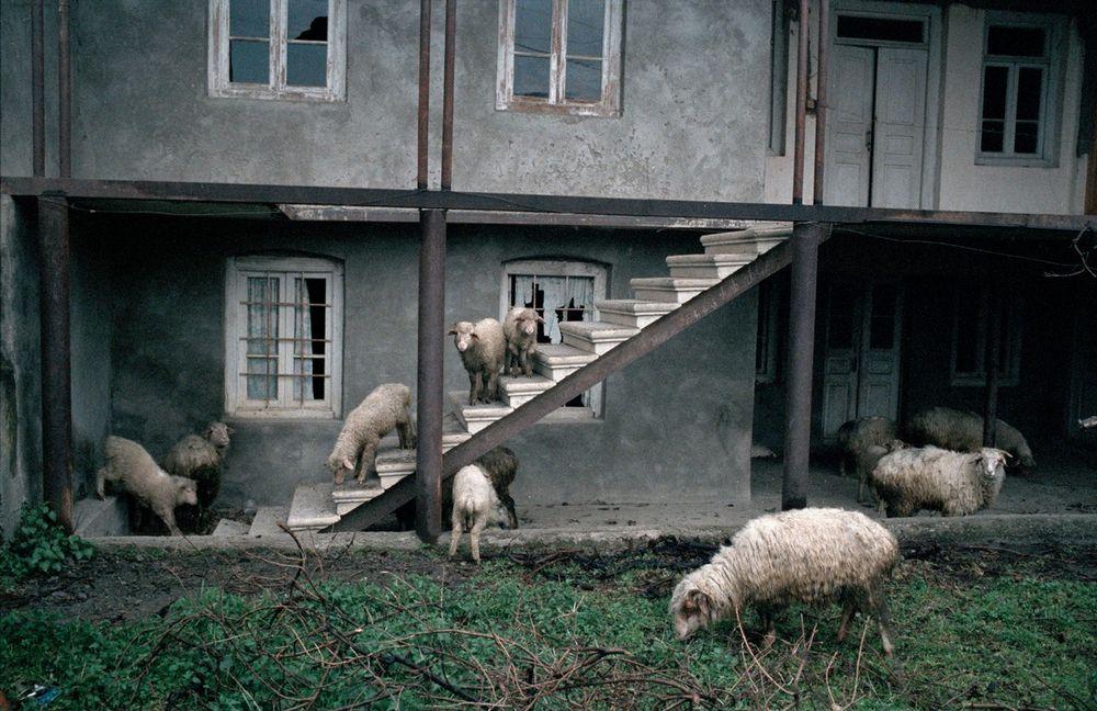 Путь пастуха, фотограф Дмитрий Гомберг