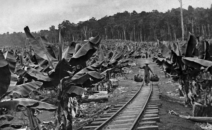 Эволюция банана: от лесного фрукта до продукта ГМО